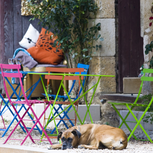 """""""French dog on guard at cafe in historic town of St Jean de Cole, France"""" stock image"""