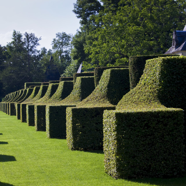 """Les Jardins de Manoir d""Eyrignac gardens, the Hornbeam Alley, at Salignac..."" stock image"
