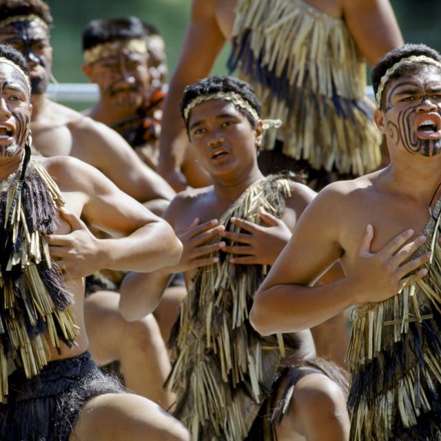 Фото маори австралии