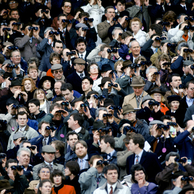 """""""Spectactors in grandstand at Cheltenham Racecourse for the National Hunt..."""" stock image"""