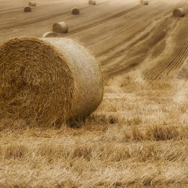 """Festival of Hay Balls"" stock image"