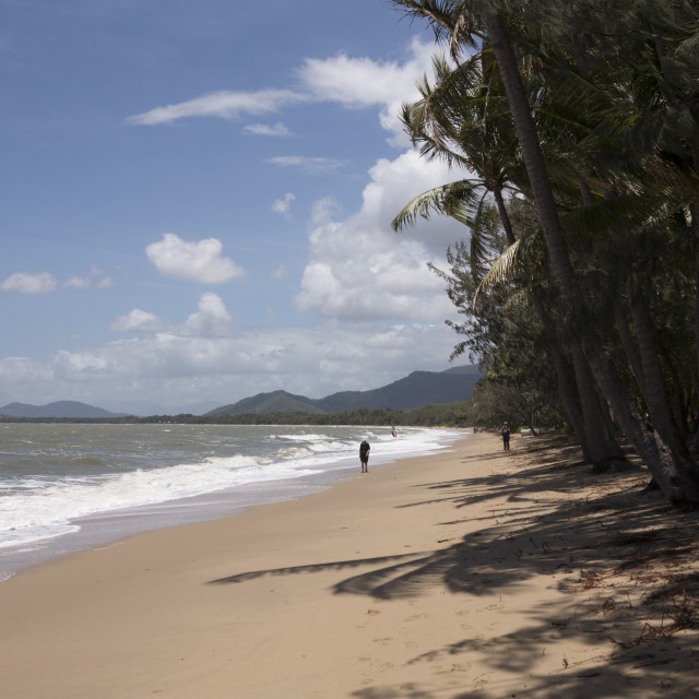 """""""Beach at Palm Cove, Cairns, North Queensland, Australia, Pacific"""" stock image"""