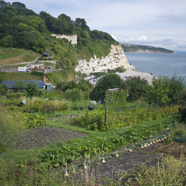 """Allotments on the coast at Beer, Devon, England, United Kingdom, Europe"" stock image"