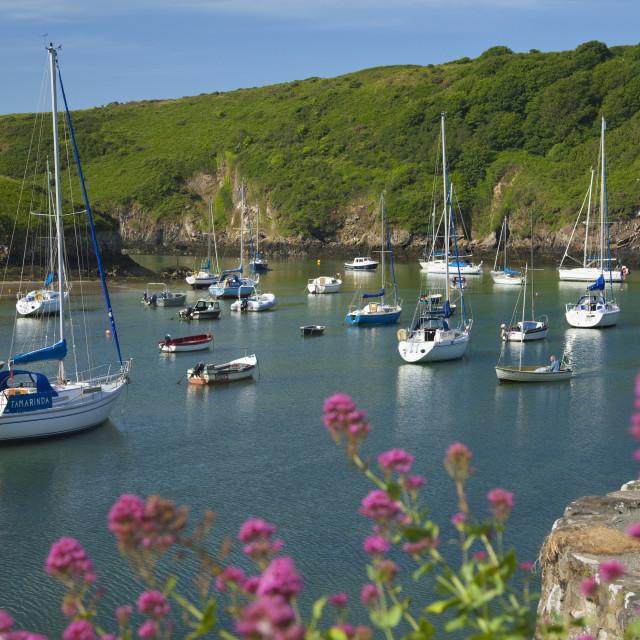 """Solva Harbour, Pembrokeshire, Wales, United Kingdom, Europe"" stock image"