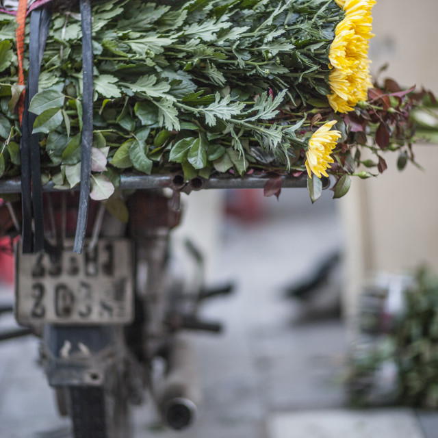 """Moped and flowers, Hanoi, Vietnam, Indochina, Southeast Asia, Asia"" stock image"