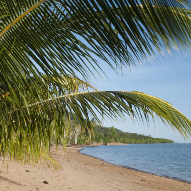 """Dunk Island beach with islands offshore, palm leaves, Great Barrier Reef,..."" stock image"