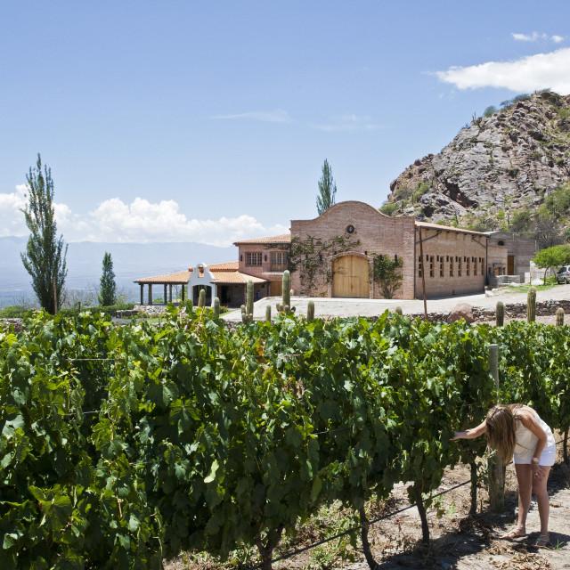 """San Pedro de Yacochuya winery in Cafayate, Salta Province, Argentina, South..."" stock image"
