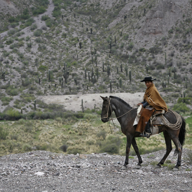 """Northern gaucho riding a horse near Purmamarca, Quebrada de Humahuaca, Jujuy..."" stock image"