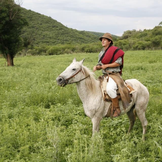 """Gaucho riding a horse at an estancia near Guemes, Salta Province, Argentina,..."" stock image"