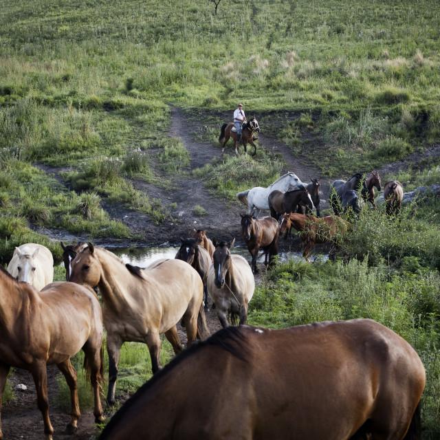 """Gaucho with horses at Estancia Los Potreros, Cordoba Province, Argentina,..."" stock image"