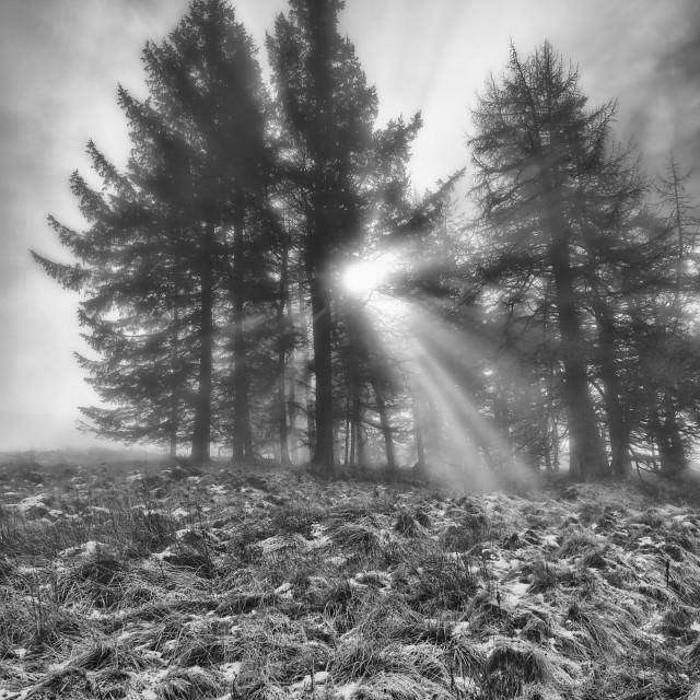 """Mystical Sun Rays"" stock image"