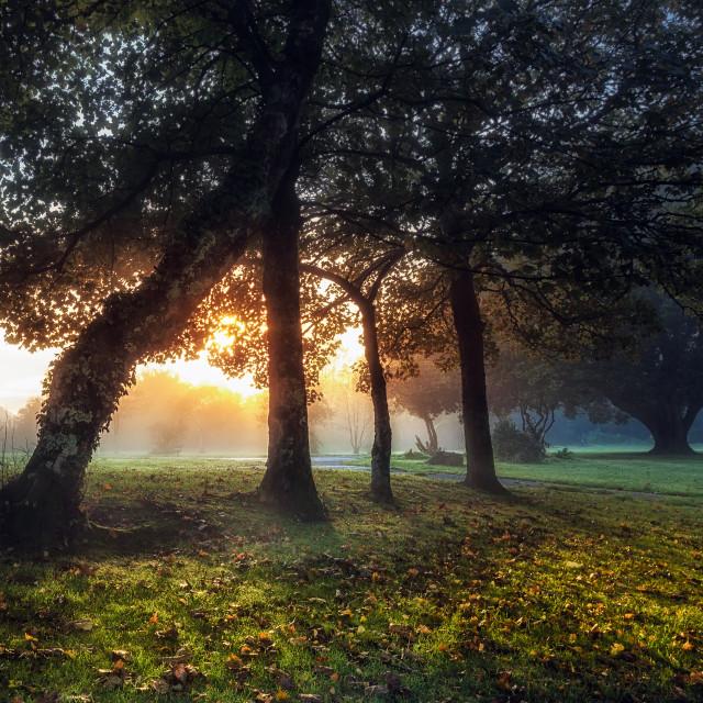 """""""Sunrise at Ravenhill Park"""" stock image"""