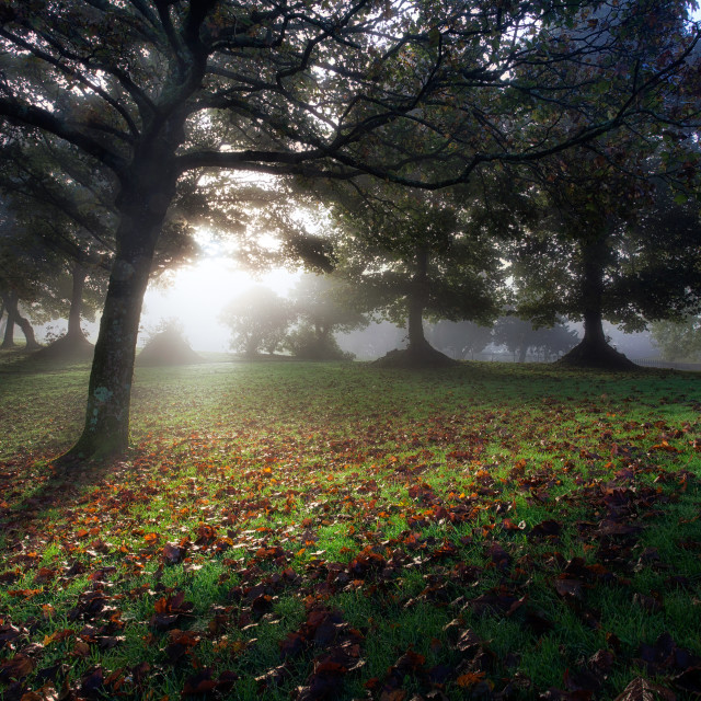 """Misty morning at Ravenhill Park"" stock image"