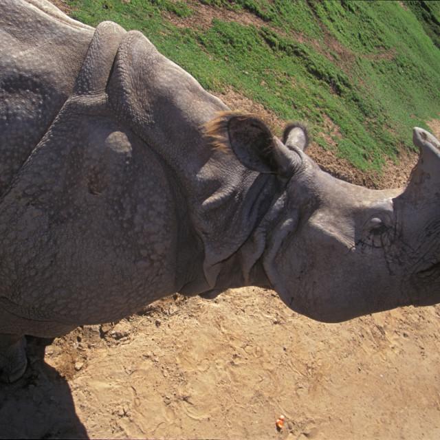 """""""Indian Rhino"""" stock image"""