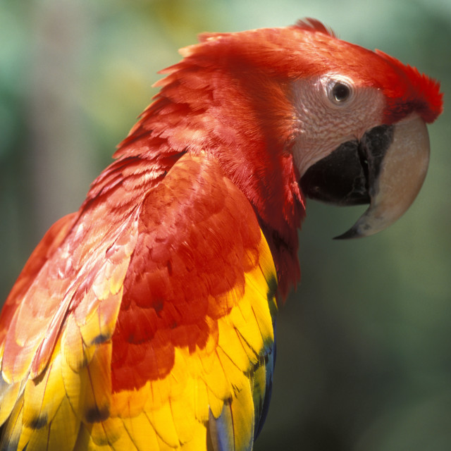 """macaw"" stock image"