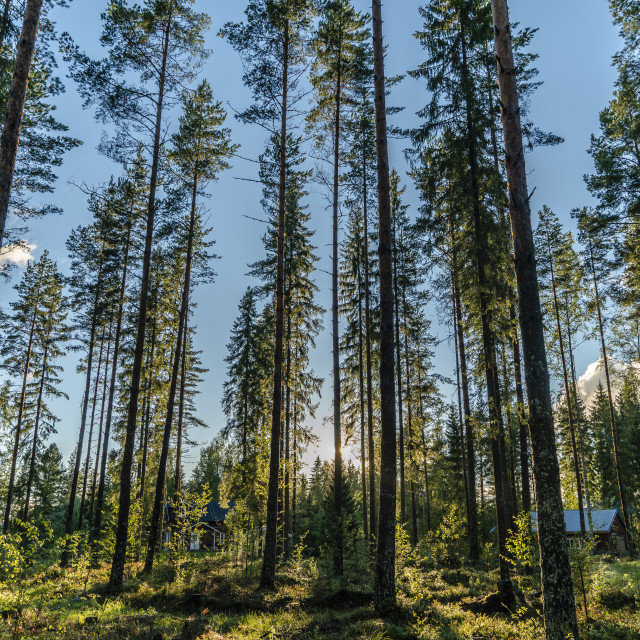 """""""Forest 4"""" stock image"""