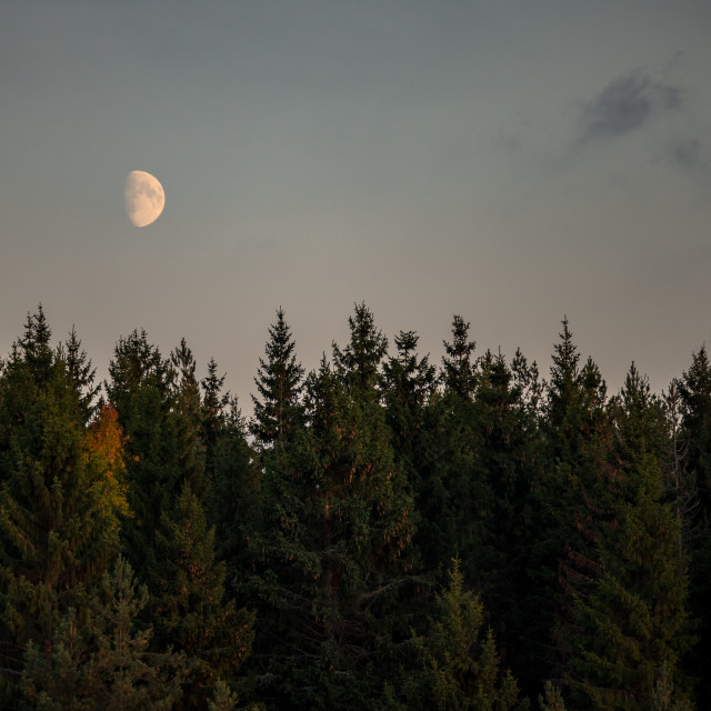 """Autumn forest moon"" stock image"