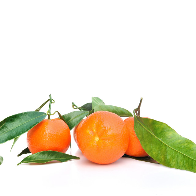 """""""tangerines with leaf"""" stock image"""