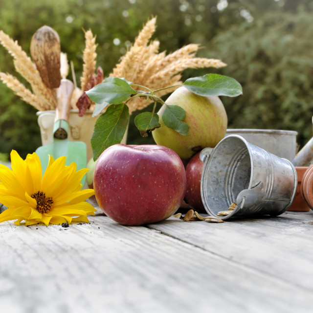 """fruit and flower on a table"" stock image"