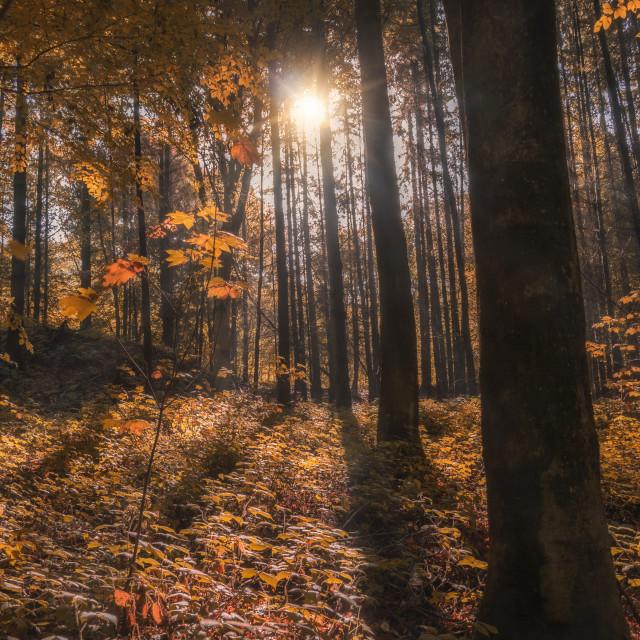 """Autumn comes closer"" stock image"