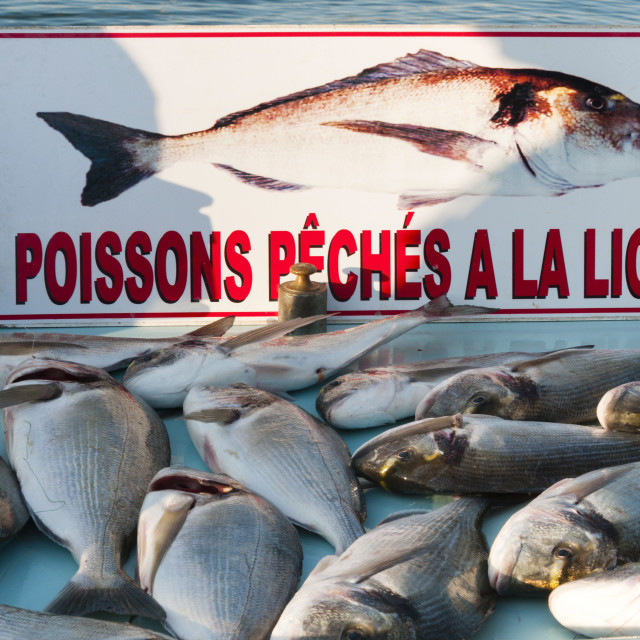 """Sunday Fish Market at Vieux Port, Marseille, Bouches du Rhone,..."" stock image"