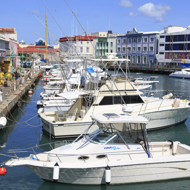 """""""Boats in The Careenage, Bridgetown, Barbados, West Indies, Caribbean, Central..."""" stock image"""