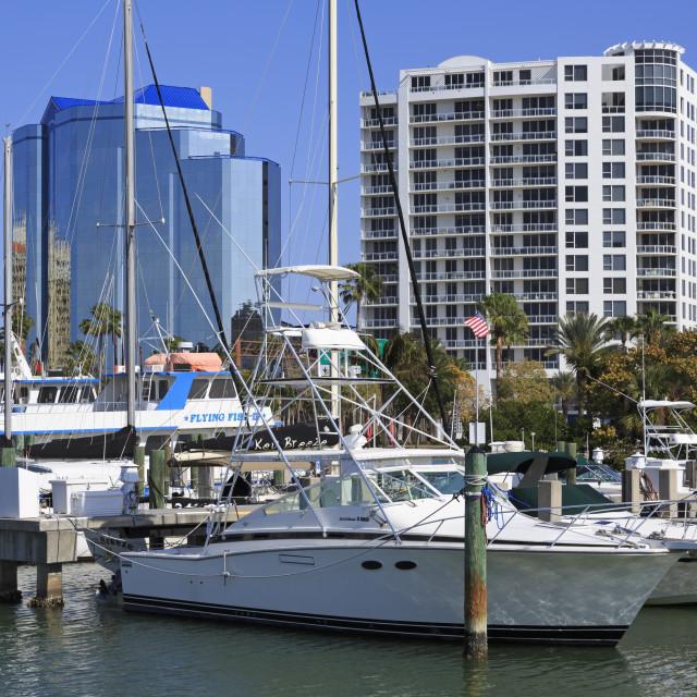 """""""Bayfront Marina, Sarasota, Florida, United States of America, North America"""" stock image"""