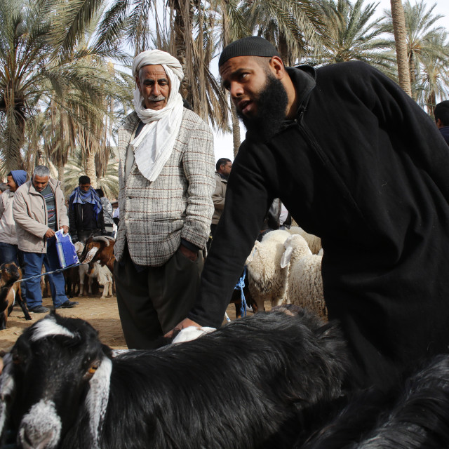 """""""Weekly cattle market in Douz, southern Tunisia, North Africa, Africa"""" stock image"""