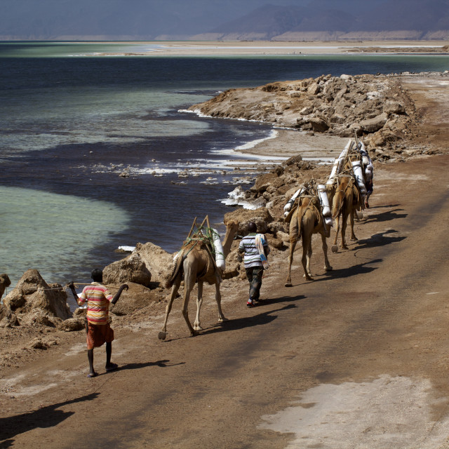 """Salt caravan in Djibouti, going from Assal Lake to Ethiopian mountains,..."" stock image"