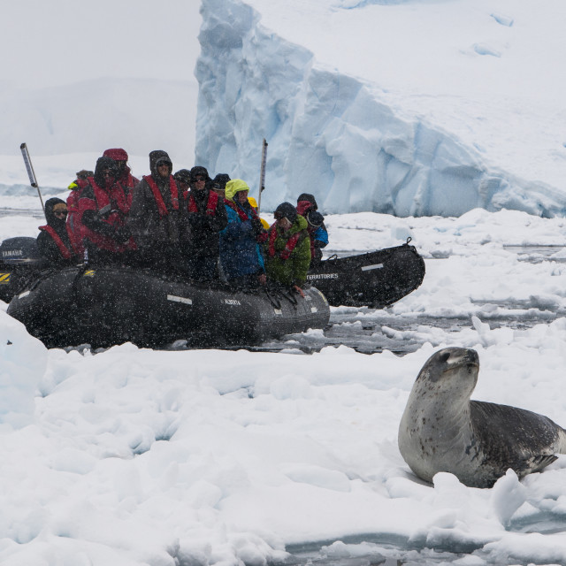 """Tourists in a Zodiac looking at a leopard seal (Hydrurga leptonyx),..."" stock image"