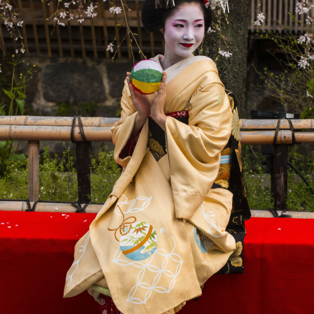 """Real Geisha posing before a cherry blossom tree in the Geisha quarter of Gion..."" stock image"