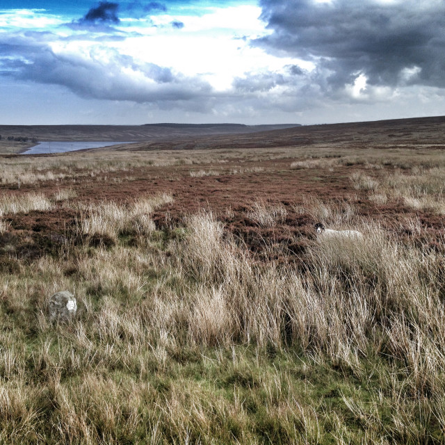"""Moorland in County Durham, UK"" stock image"
