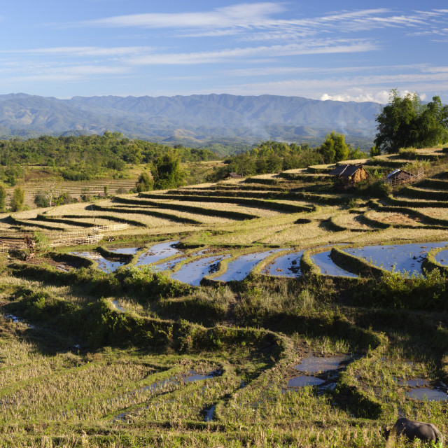 """""""Terraced rice fields and Shan hills, near Kengtung, Shan State, Myanmar (Burma)"""" stock image"""