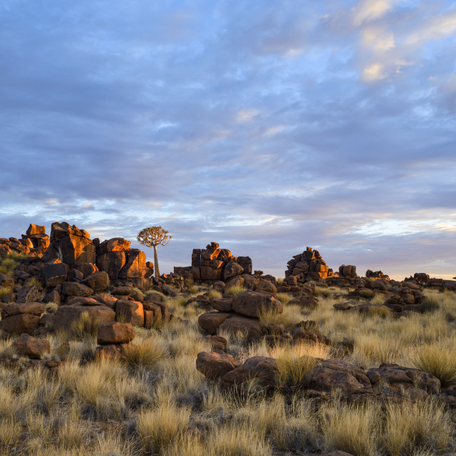 """Quiver trees and boulders in the Giant's Playground at dawn, Namibia, Africa"" stock image"