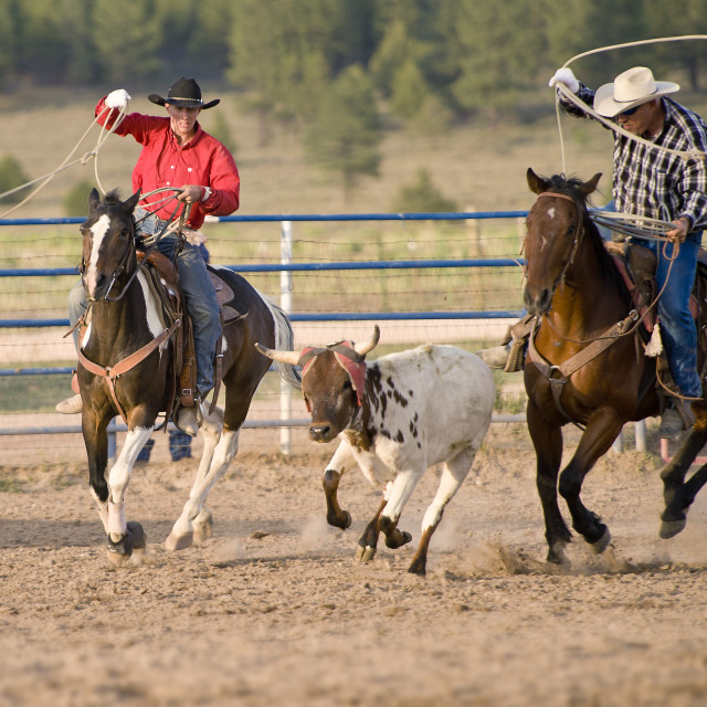 """Bryce Rodeo, Bryce, Utah, USA"" stock image"