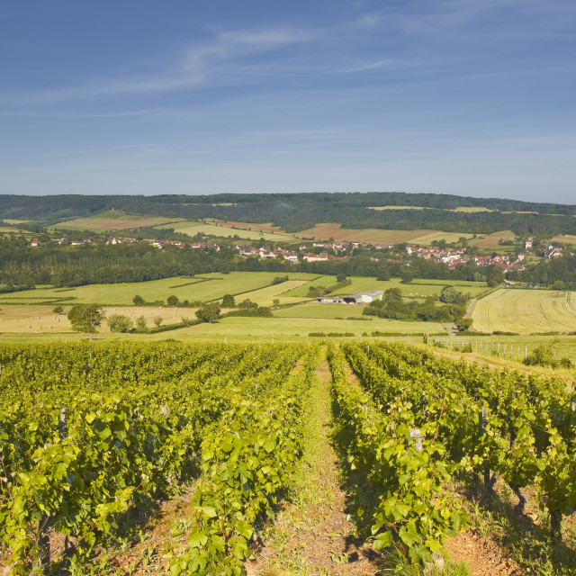 """""""Vineyards above the village of Asquin in the Yonne area of Burgundy. The..."""" stock image"""