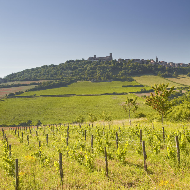 """""""Vineyards near to the hilltop village of Vezelay in the Yonne area of Burgundy."""" stock image"""