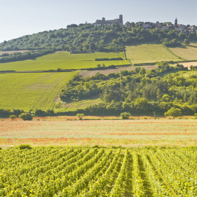 """Vineyards near to the hilltop village of Vezelay in the Yonne area of Burgundy."" stock image"