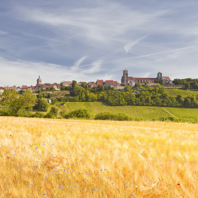 """""""A wheat field below the hilltop village of Vezelay in the Yonne area of..."""" stock image"""
