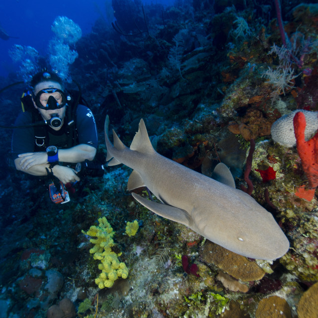 """Close encounters with Nurse shark on G Spot Reef, Turks and Caicos, West..."" stock image"