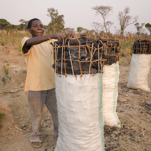 """""""Charcoal makers selling charcoal on the side of the road, Zambia, Africa"""" stock image"""