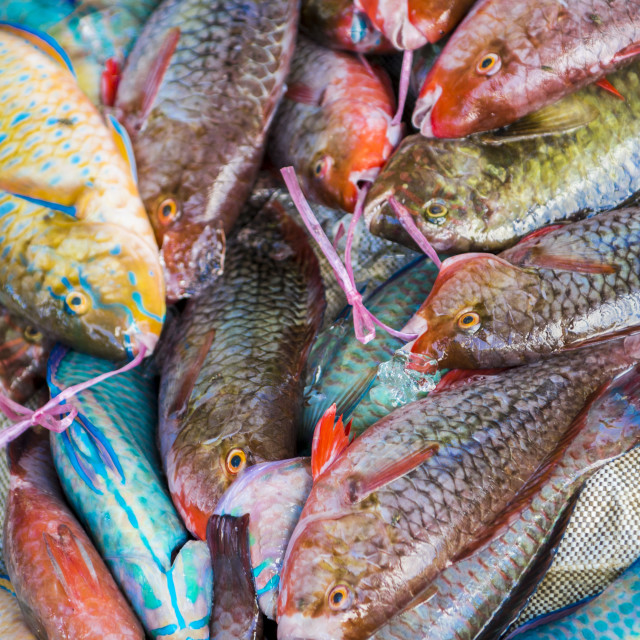 """Local fish market, Praslin, Republic of Seychelles, Indian Ocean."" stock image"