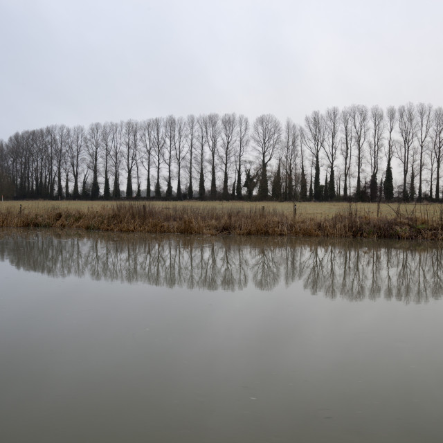 """Line of bare trees reflected in River Thames, Lechlade, Cotswolds,..."" stock image"