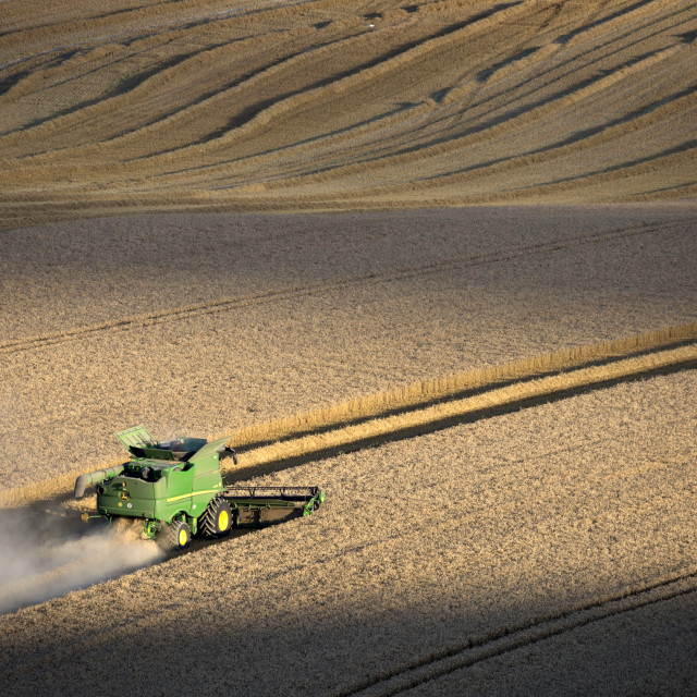 """Harvesting wheat with combine harvester, near Winchester, Hampshire, England,..."" stock image"