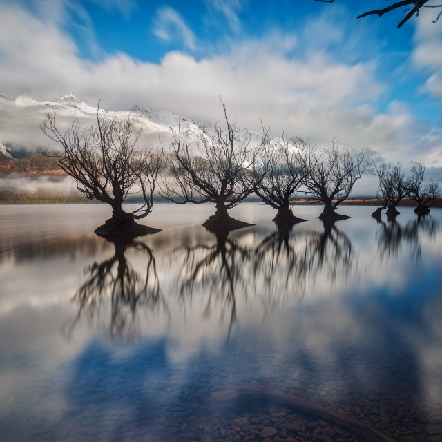 """Glenorchy Willows New Zealand"" stock image"