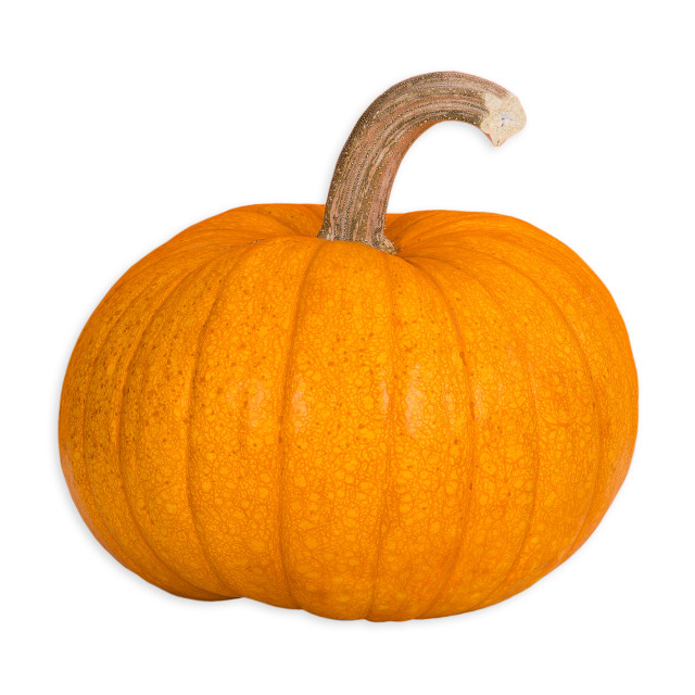 """Sugar Pie Pumpkin"" stock image"