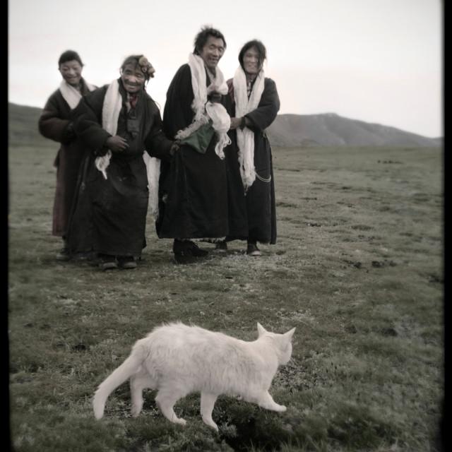 """Nomads with white cat , Tibert"" stock image"