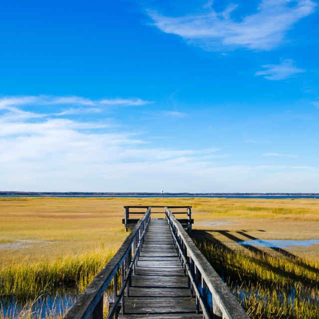 """Wooden dock on a swamp with blue sky"" stock image"