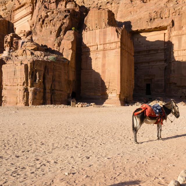 """Donkey in Petra"" stock image"