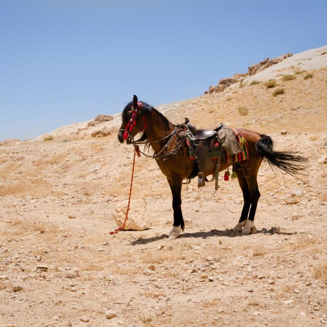 """Saddled horse in Petra"" stock image"